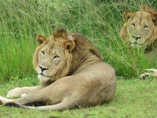 Zdjęcie Akagera National Park
