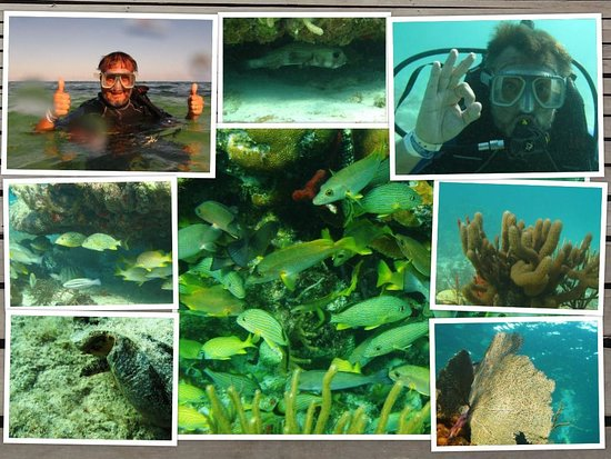 Do a discover scuba dive with Diverspoint.