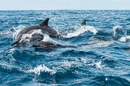 Valampuri Kite Resort: dolphin tour