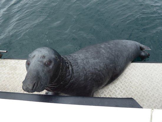 Shetland Wildlife Boat Tours