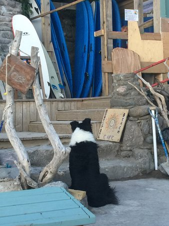 Torpoint, UK: Murphy the Border Collie checking on our order!!!