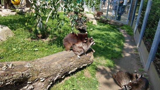 Heidelberger Zoo