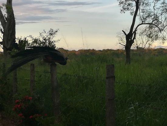 Mihintale, Σρι Λάνκα: gateway road lead to peacock garden villa