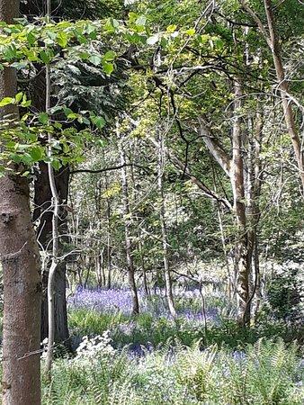 Bledington, UK: 20180513_105632_large.jpg