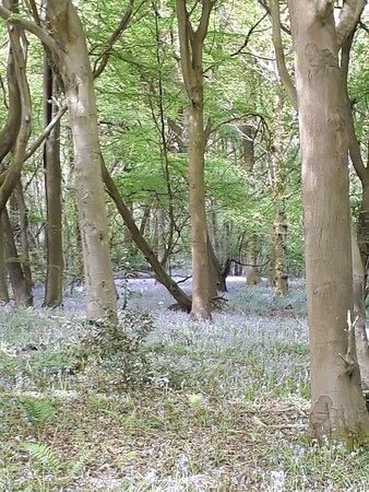 Bledington, UK: 20180513_110129_large.jpg