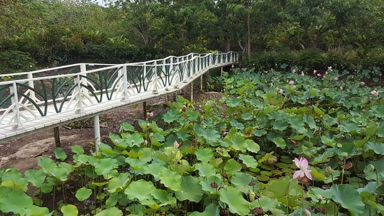 Img 20180521 135908 653 picture of belize - Atlanta farm and garden by owner ...