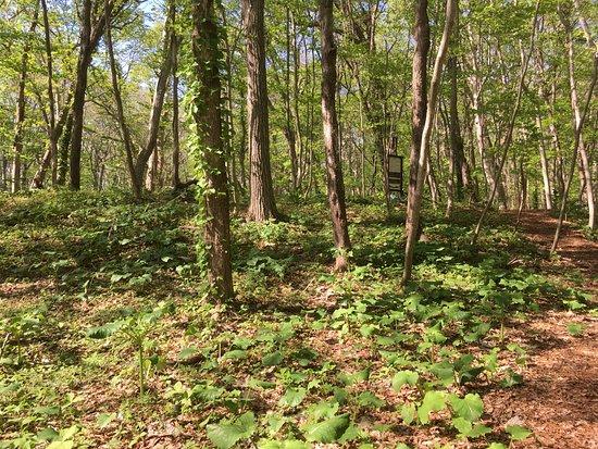 Kiusu Shuteibogun Ancient Tombs