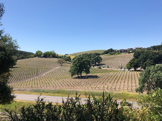 AronHill Vineyards: View from the patio