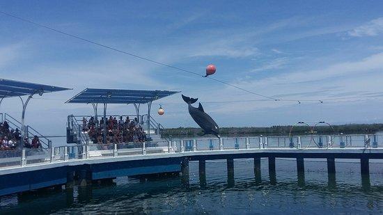 Delfinario en Cayo Santa Maria : 20180510_115323_large.jpg