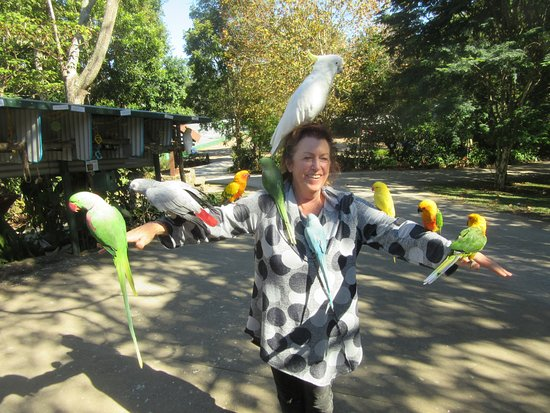 Maleny, ออสเตรเลีย: At the Entrance to the Gardens, these wonderful parrots greet you;