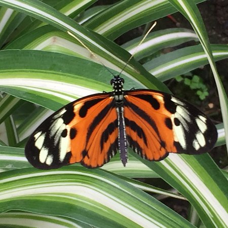 Mariposas de Mindo - Butterfly Garden : photo5.jpg