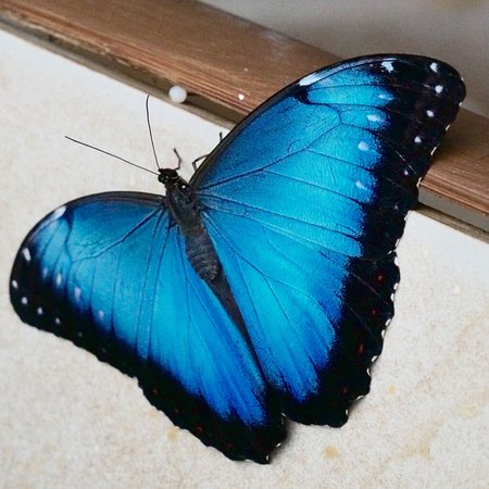 Mariposas de Mindo - Butterfly Garden : photo6.jpg