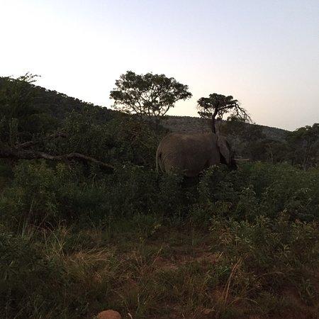 Welgevonden Game Reserve, جنوب أفريقيا: photo4.jpg