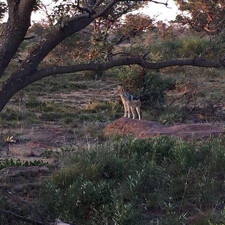 Welgevonden Game Reserve, جنوب أفريقيا: photo5.jpg
