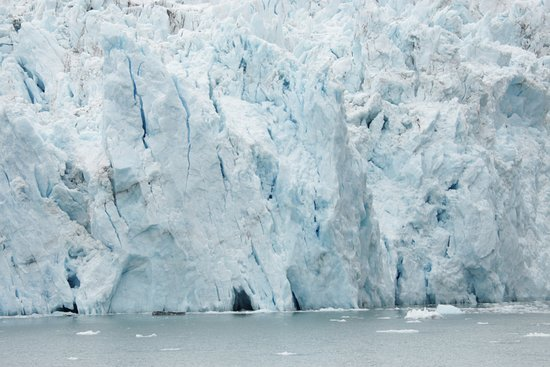 26 Glacier Cruise by Phillips Cruises and Tours: Glacier