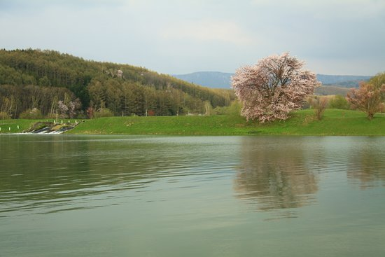 Higashikawa-cho, Japón: この季節天候により背景に残雪の十勝連山が望めるそうです