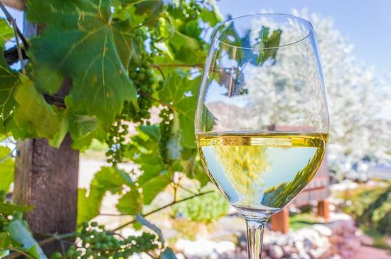 Taos Winery Tour