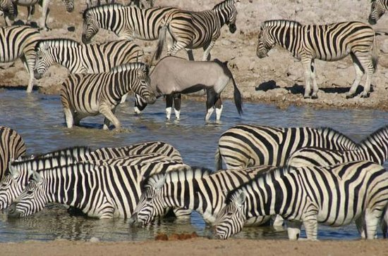 3 jours Safari Wildlife Etosha...