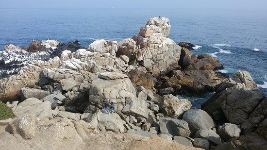 Roca Oceanica
