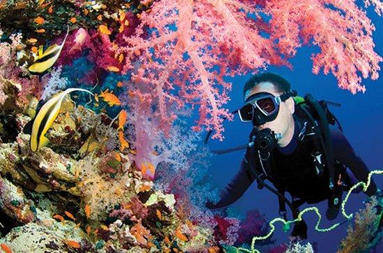 プエルトモレロス国立海洋公園の2タンクダイブ