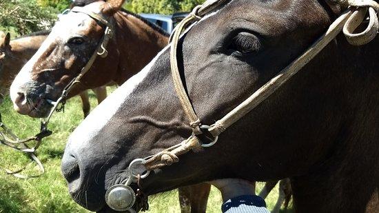 Colonia Horseriding: Lovely horses
