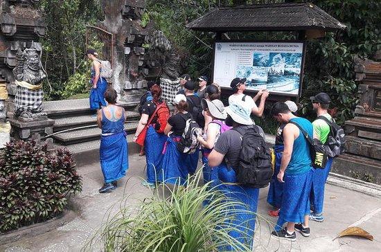 Caminata de exploración de arroz y...