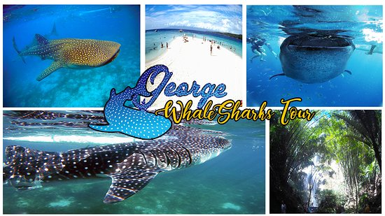 George Whale Shark Tour Services照片
