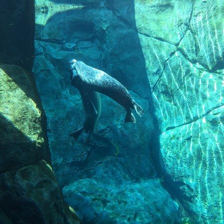 Assiniboine Park Zoo Photo