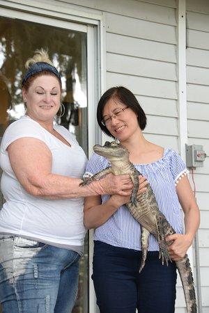 Lake Hamilton, فلوريدا: Cá sấy khá bình thản nếu no và không bị ai trêu chọc