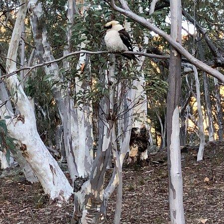 Capertee, Avustralya: photo8.jpg