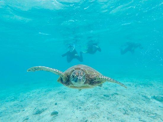 Summer Resort Miyakojima: ウミガメと泳ぐシュノーケルツアー