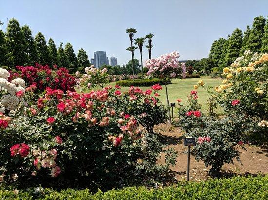 Shinjuku Gyoen National Garden: IMG_20180522_125547_large.jpg