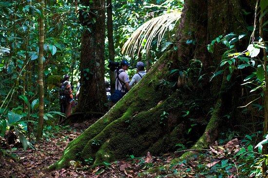 Horquetas, Kosta Rika: Be part of the Neo tropical Experience