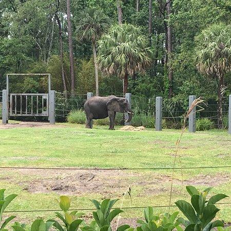 Jacksonville Zoo & Gardens照片