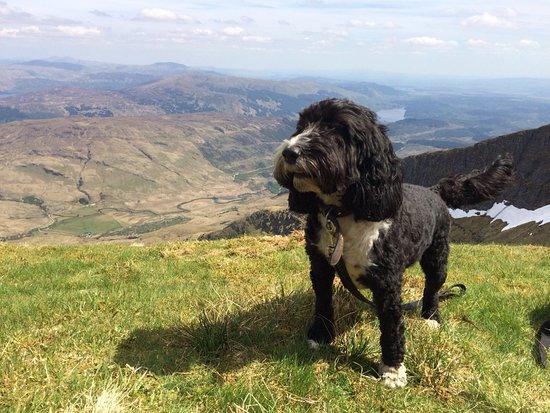 Rowardennan, UK: Belle at the top of Ben Lomond