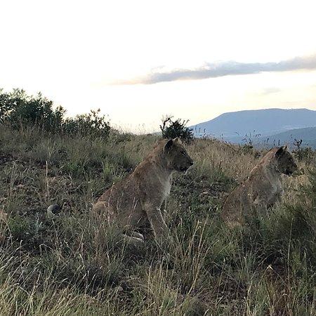 Mkuze Falls game reserve: photo3.jpg