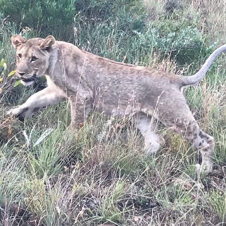 Mkuze Falls game reserve: photo4.jpg