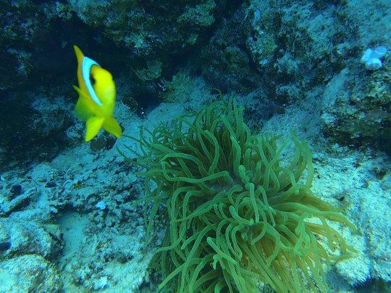 Faraana Reef Resort照片