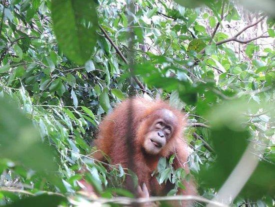 Sumatra Jungle Trek照片