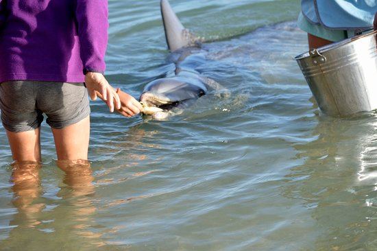 Monkey Mia Reserve: Feeding the dolphins