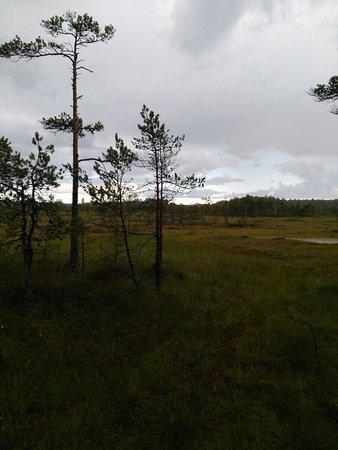 Siltakyla, فنلندا: IMG_20170721_185615_large.jpg