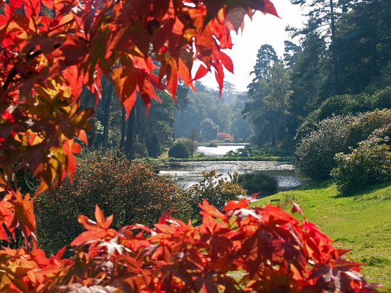 Horsham, UK: The beautiful Leonardslee Gardens