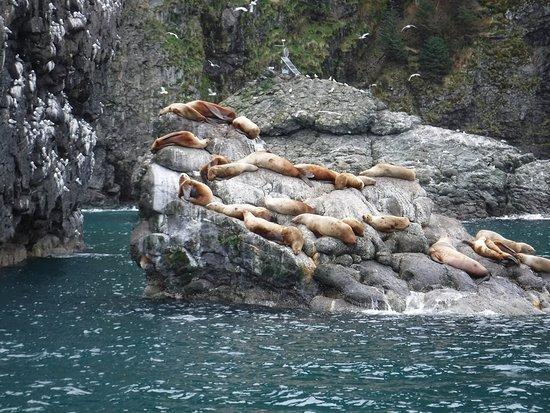 Kenai Fjords National Park Cruise from Seward: Sea Lions