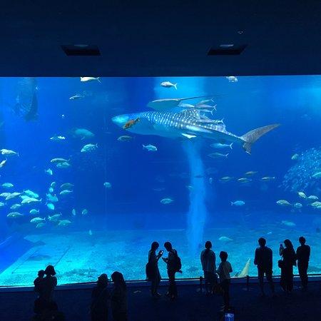 Okinawa Churaumi Aquarium: 沖縄美ら海水族館