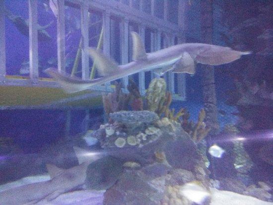 Aquaria Φωτογραφία