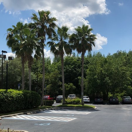 Holiday Inn Express Hotel & Suites New Tampa I-75 Bruce B. Downs: photo1.jpg