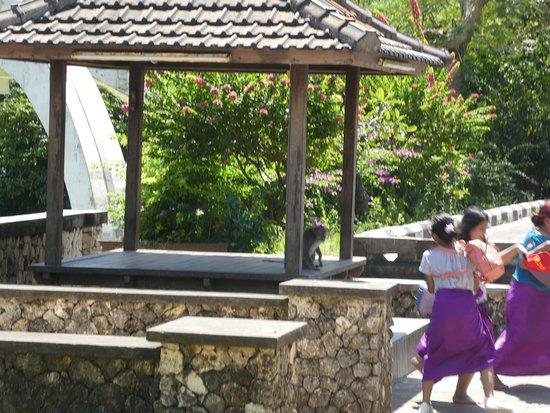 Ναός Uluwatu: Sneaking up to steal shoes.