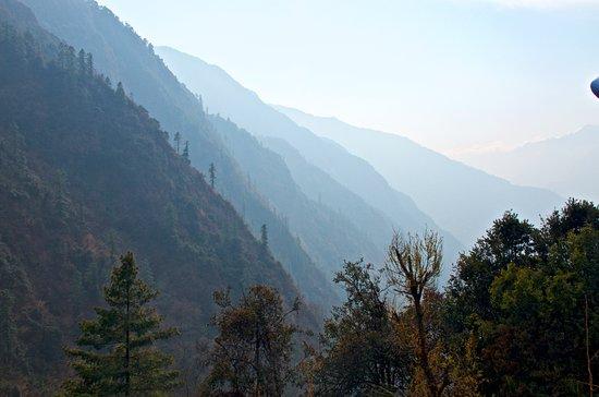 Ghandruk,Ghorepani Poon Hill Trek: way to tadapani