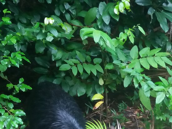 Daintree Rainforest, Cape Tribulation, Mossman Gorge in a day: Cassowary and chick