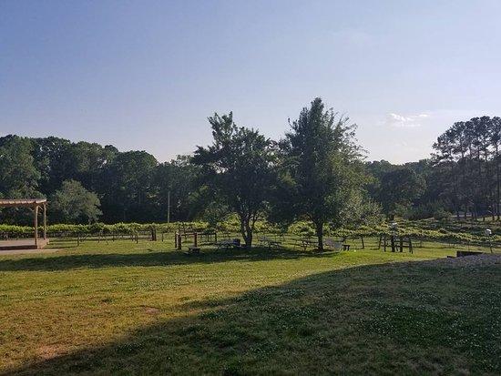 Monroe, NC: Vineyards